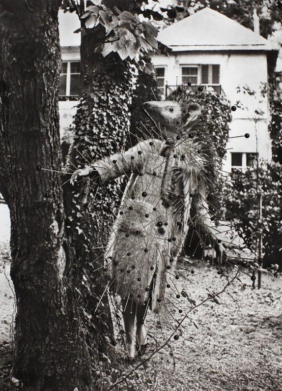 Thinskinned, Hienohipiäinen (2015)
